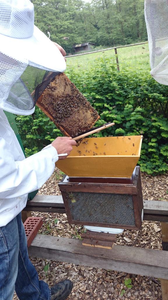 Bienen werden in Trichter gefegt